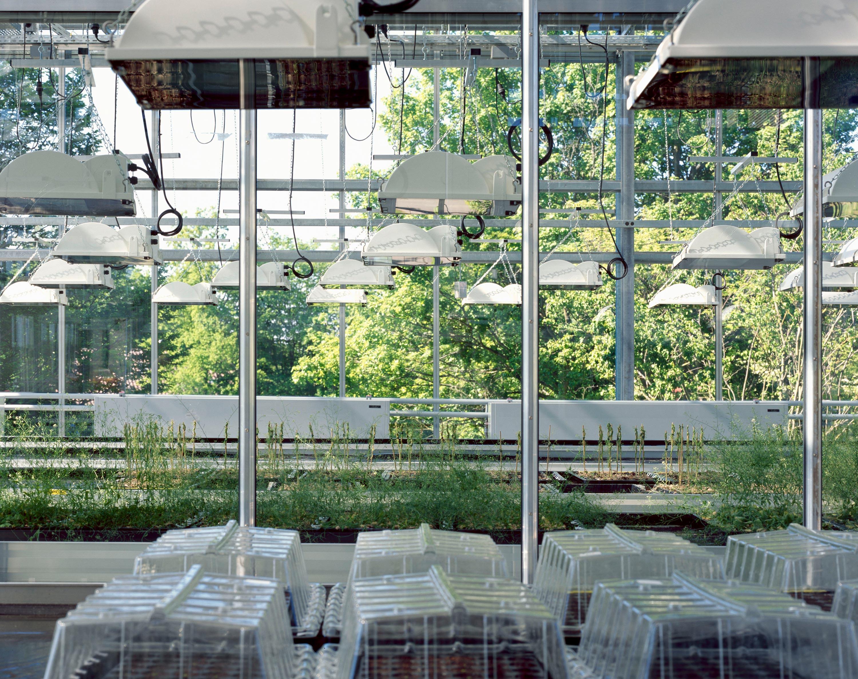 Gewächshaus zur Pflanzenforschung (10)