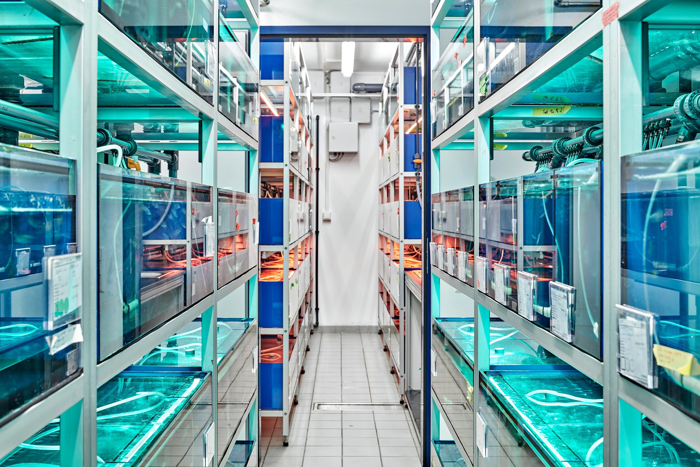 Fischzuchtstation mit S1-Labor (1)