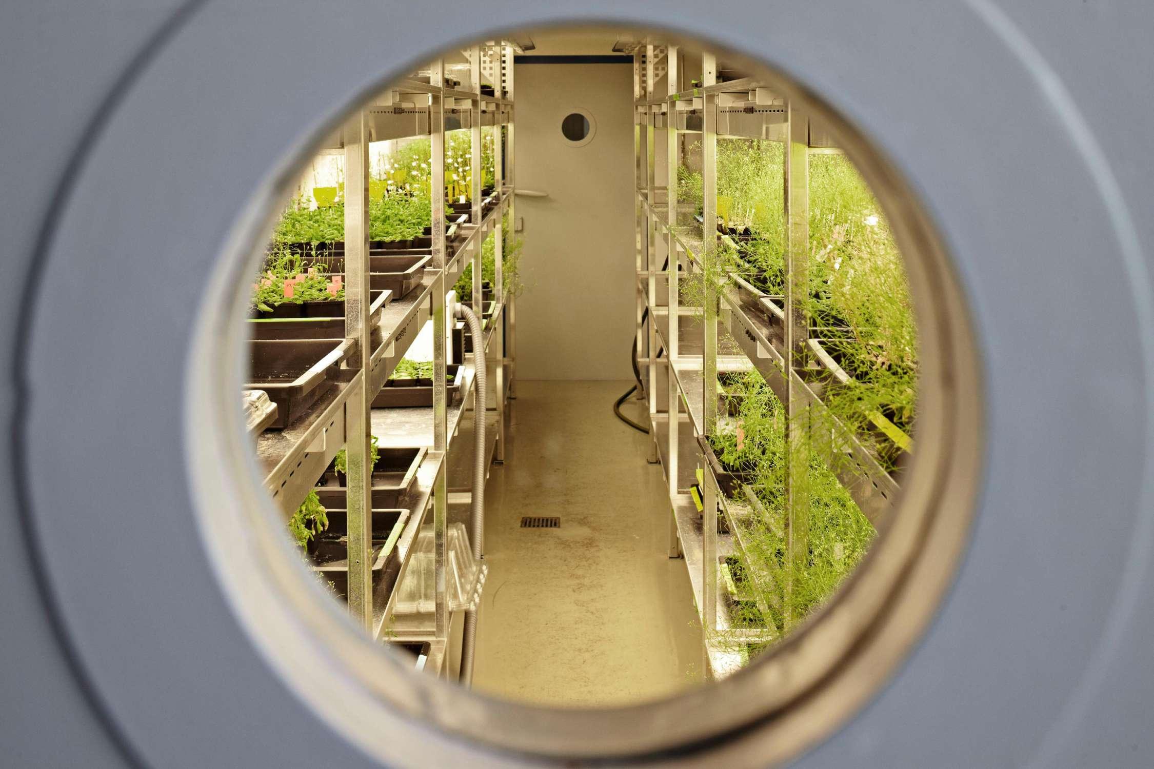 Laborräume mit Pflanzenwuchskammern (3)