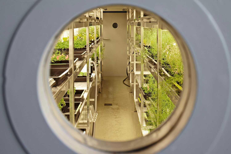 Laborräume mit Pflanzenwuchskammern